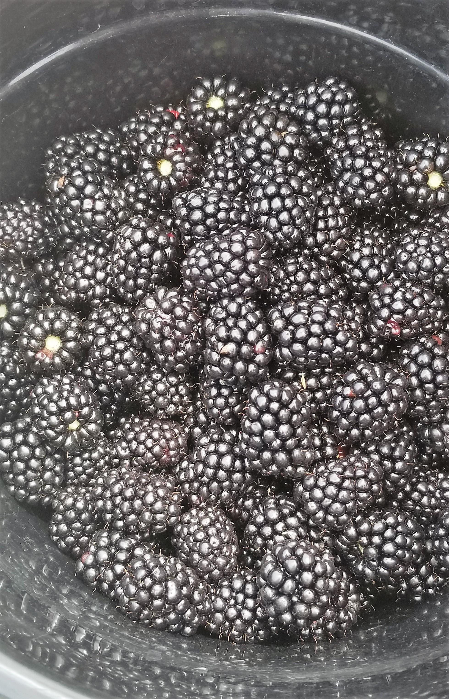 A bucket full of berries!