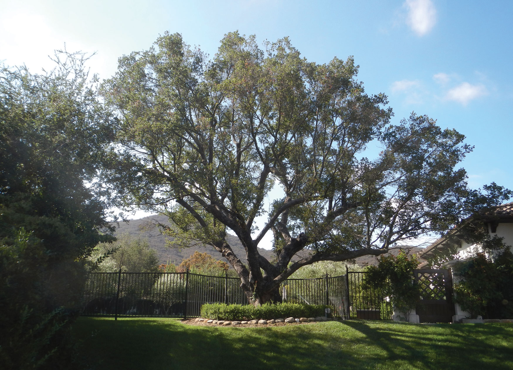 Sherwood Development Company    Oak Tree Monitoring, Preservation, & Implementation - 2005 to present