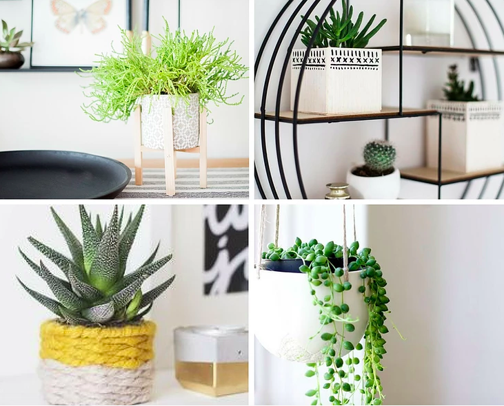 Interior decorating plants markham toronto