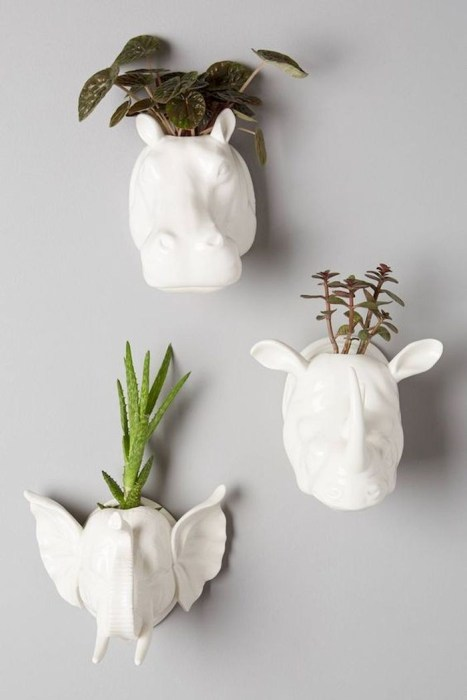 succulents on walls.jpg