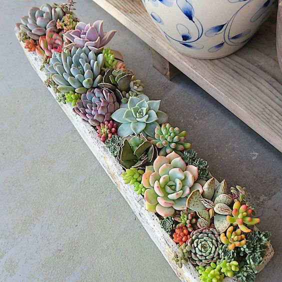succulents outdoors.jpg