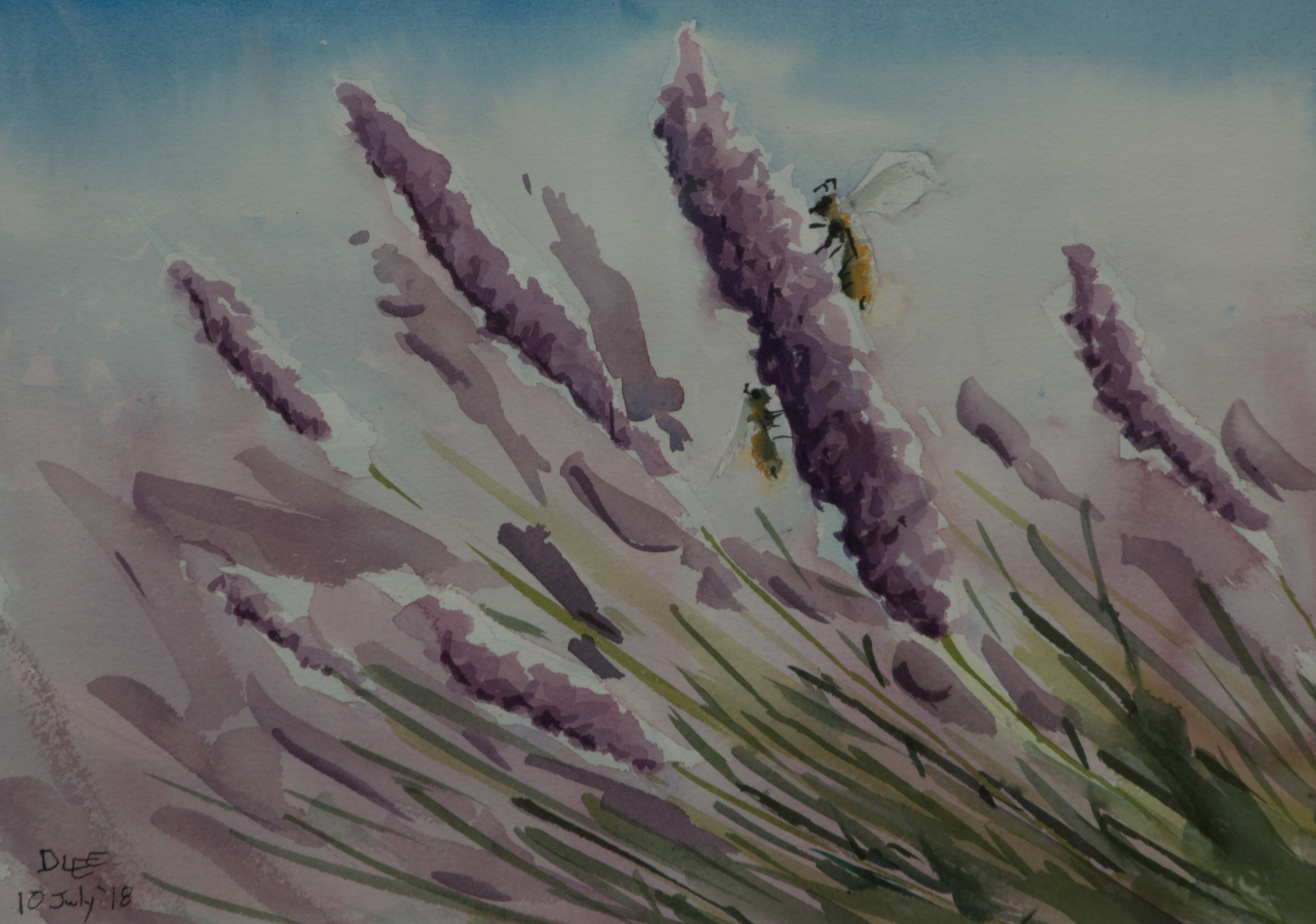 Lavender Afternoon
