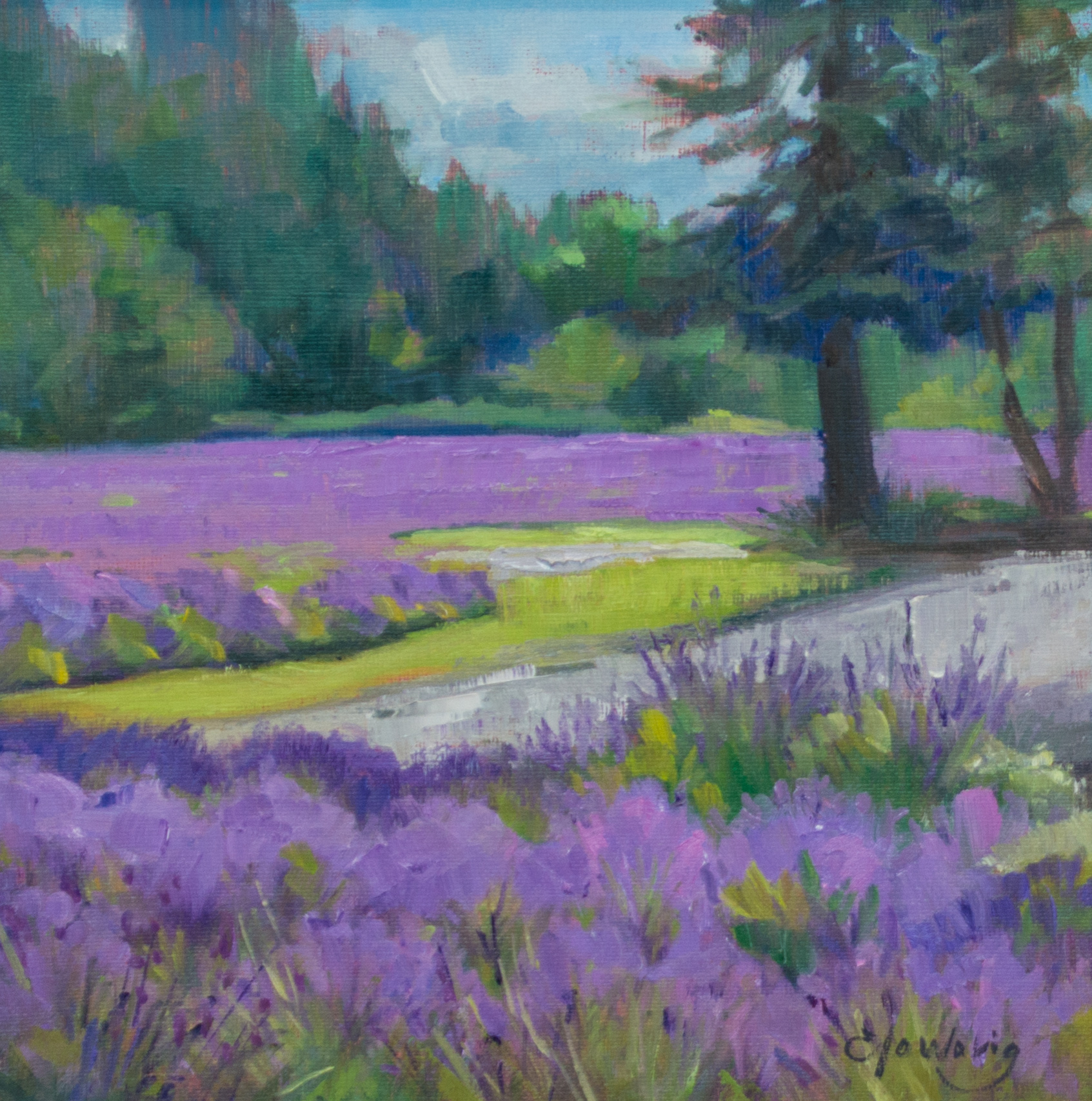 Seas of Lavender