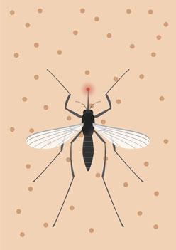 zika-mosquito-surrogacy.jpg