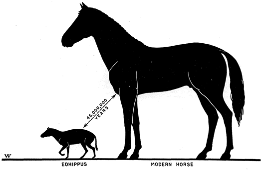 The prehistoric horse verses today's modern horse