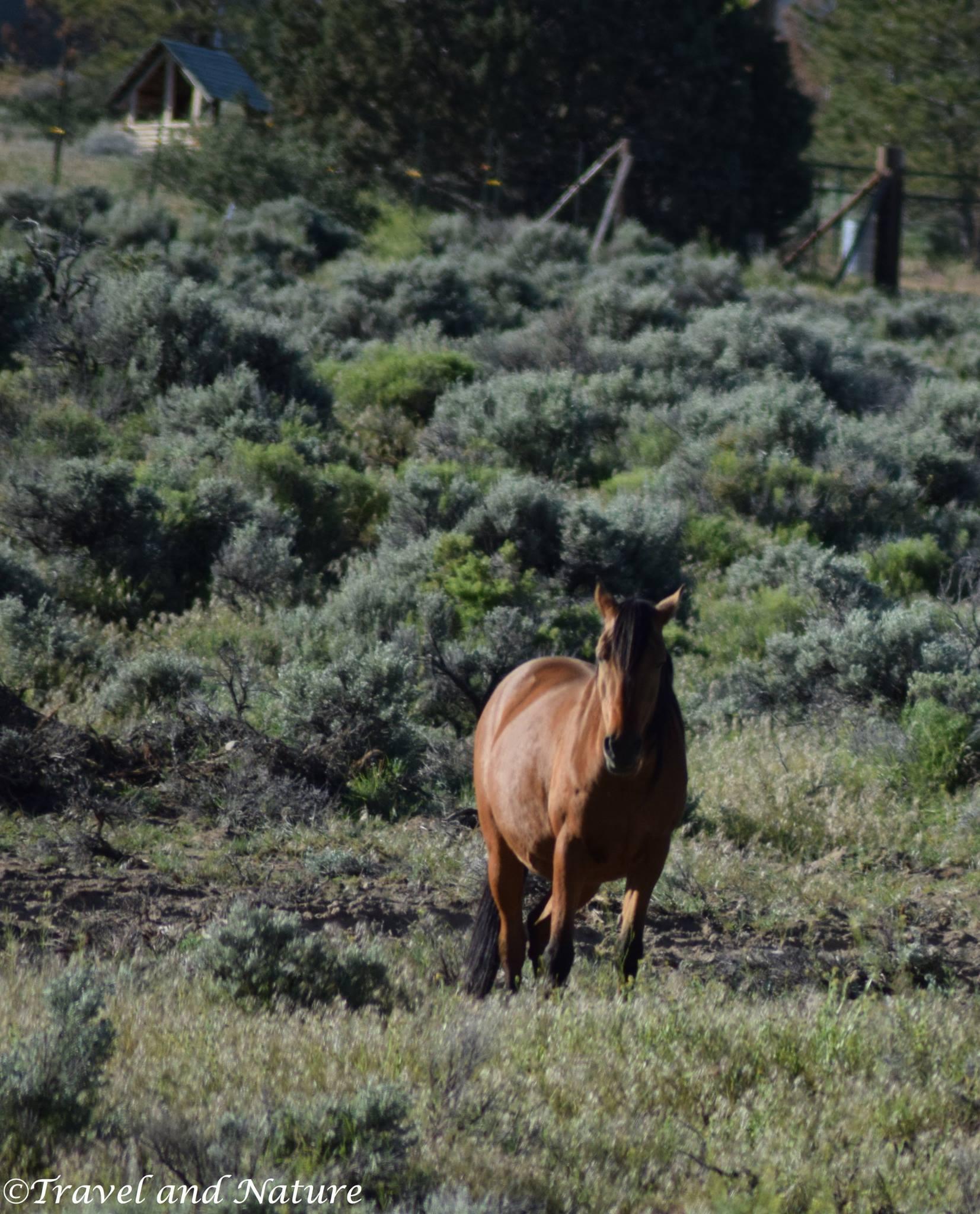 A Virginia Range Horse