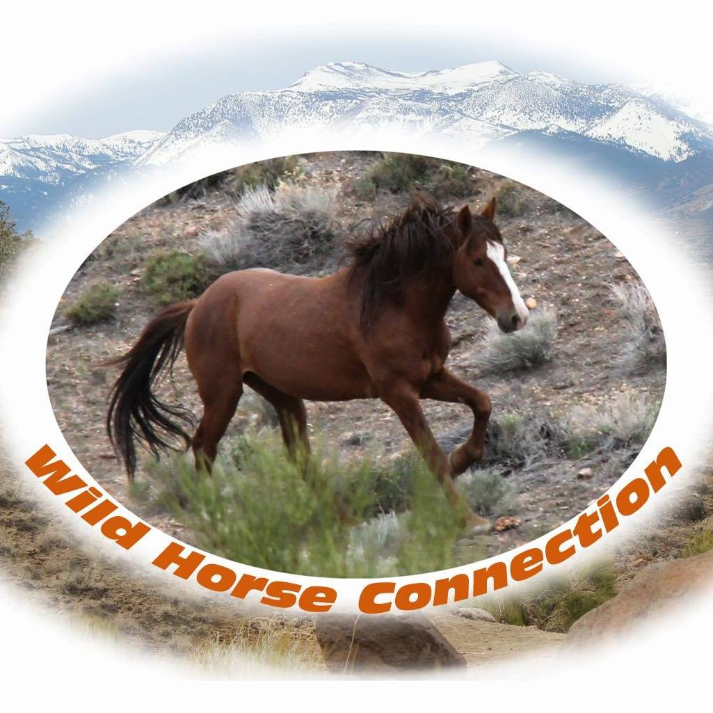 wild horse connection.jpg
