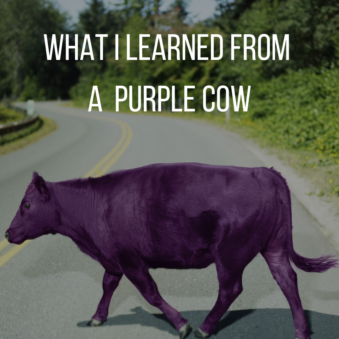 What I learned from a purple cow.png