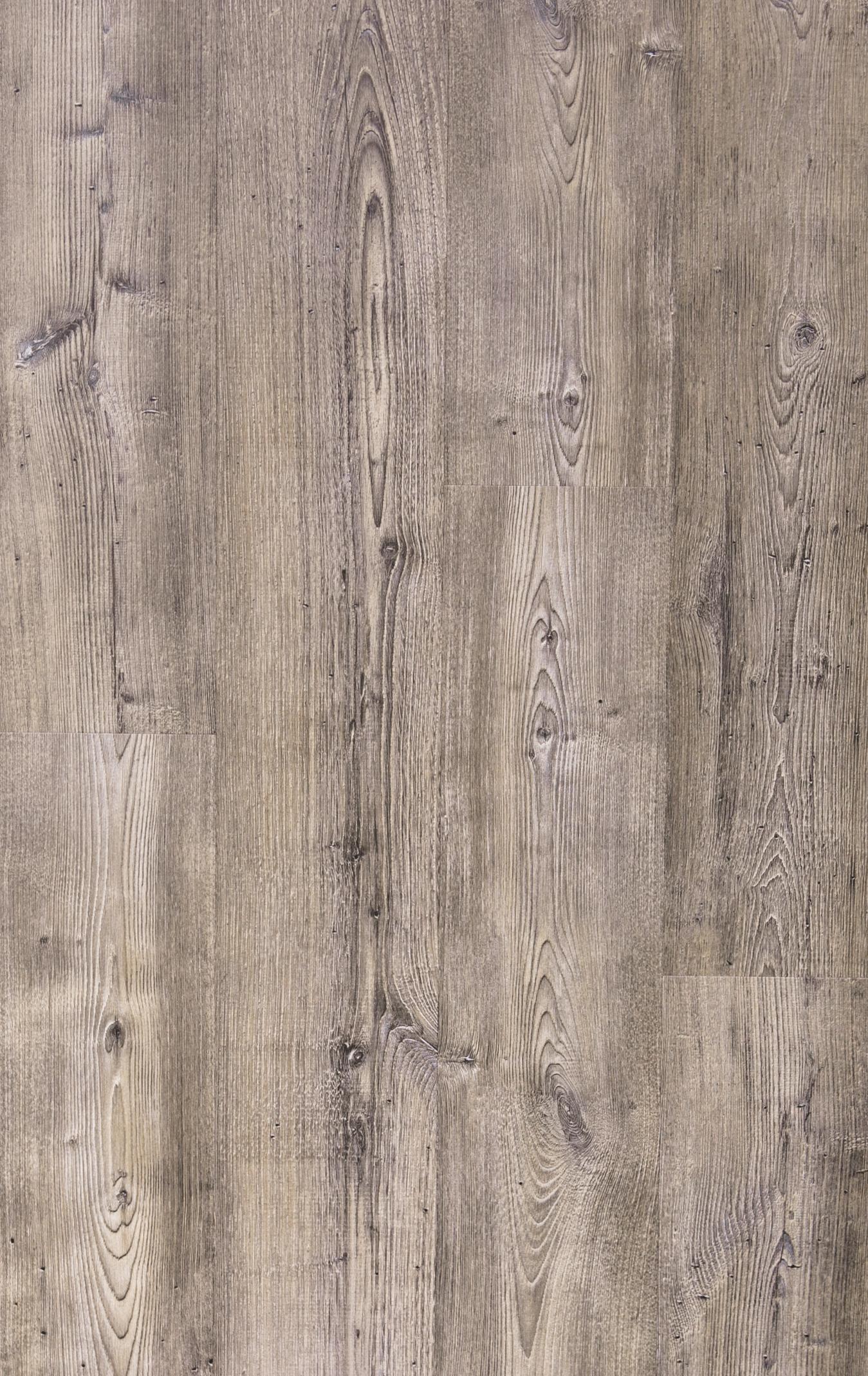 W301 - Blackwell Pine