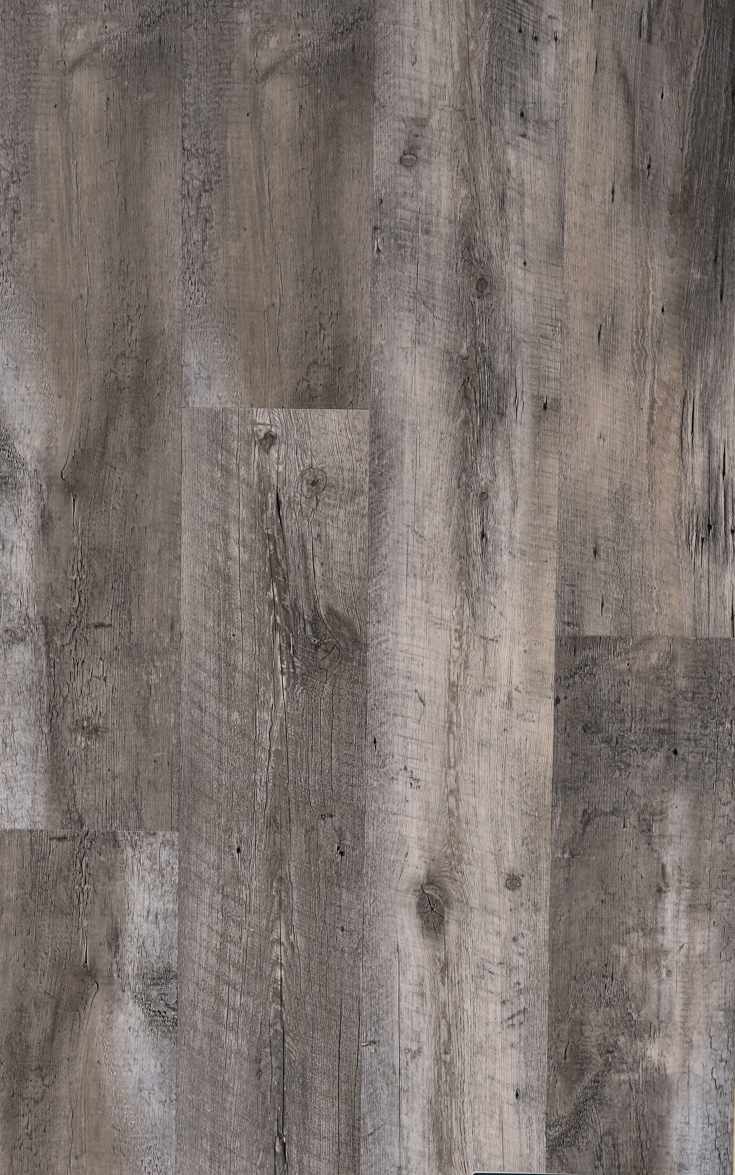 W303 - Pawleys Oak