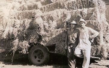 history-hay.jpg
