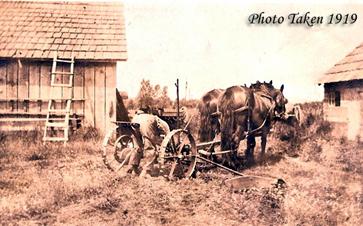 horses-363.jpg