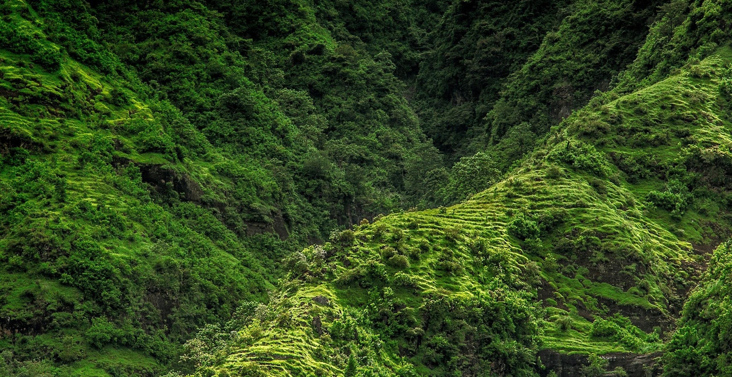 Bali, Indonesia. Photo by    Marek Okon    on    Unsplash   .