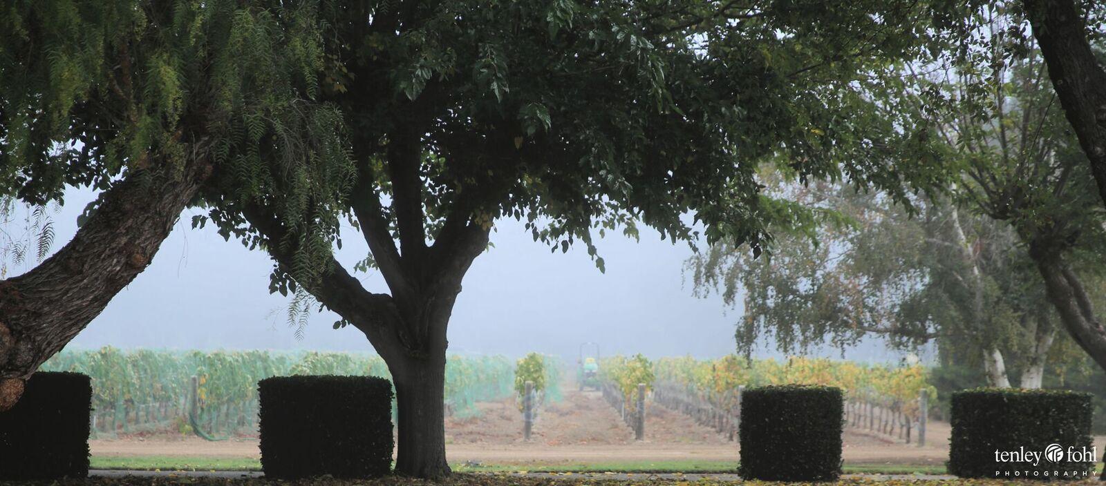 Terrior - unique to the Santa Ynez Valley