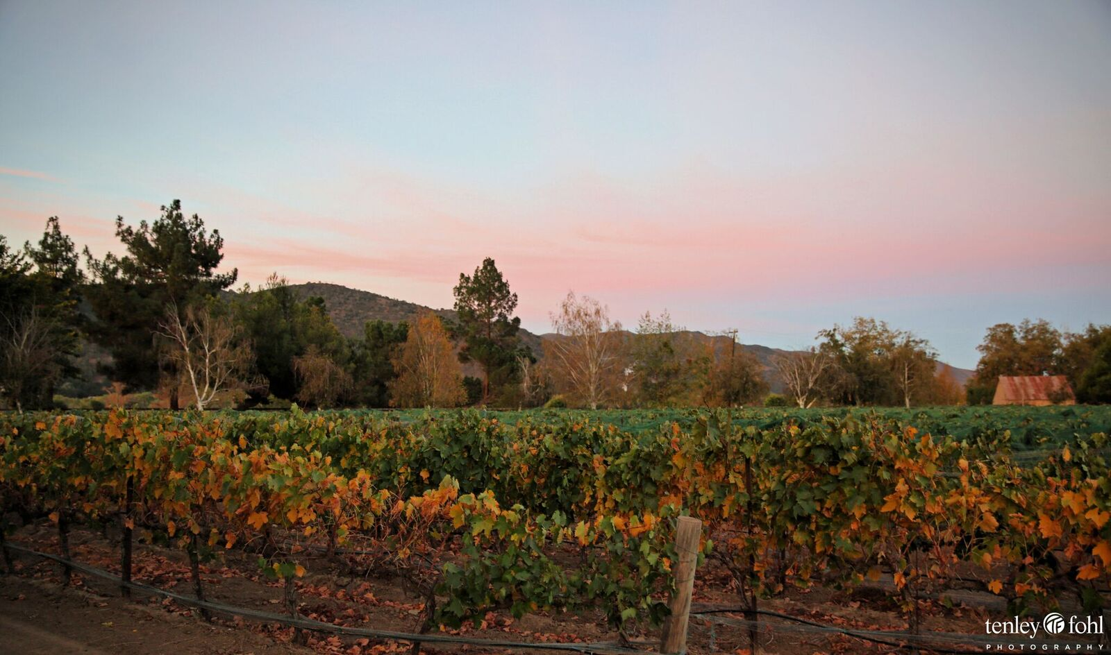 A boutique winery - 13 acres planted