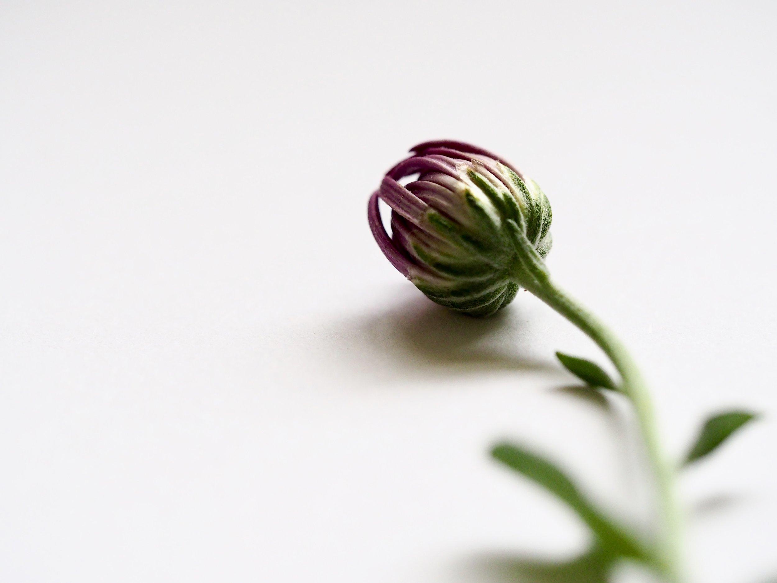 Image - closed flower bud
