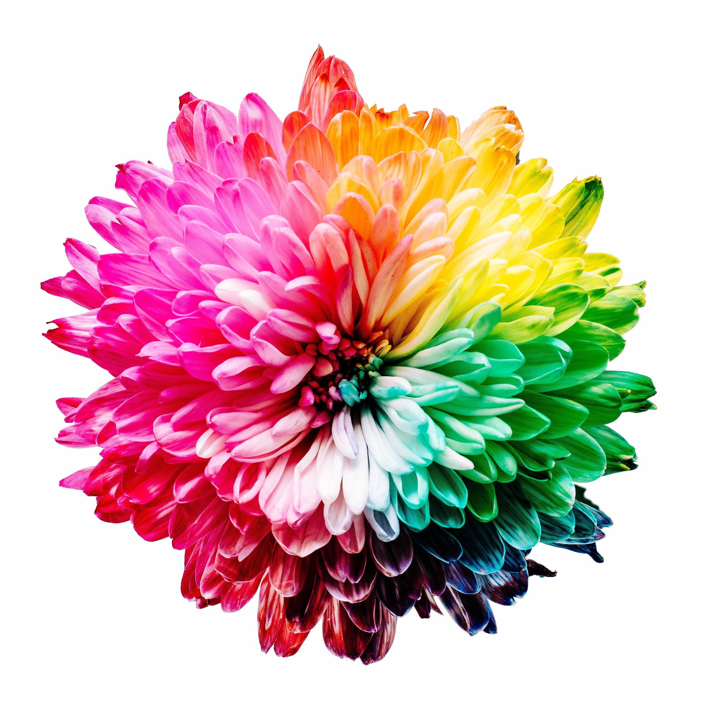 Image - multicoloured flower