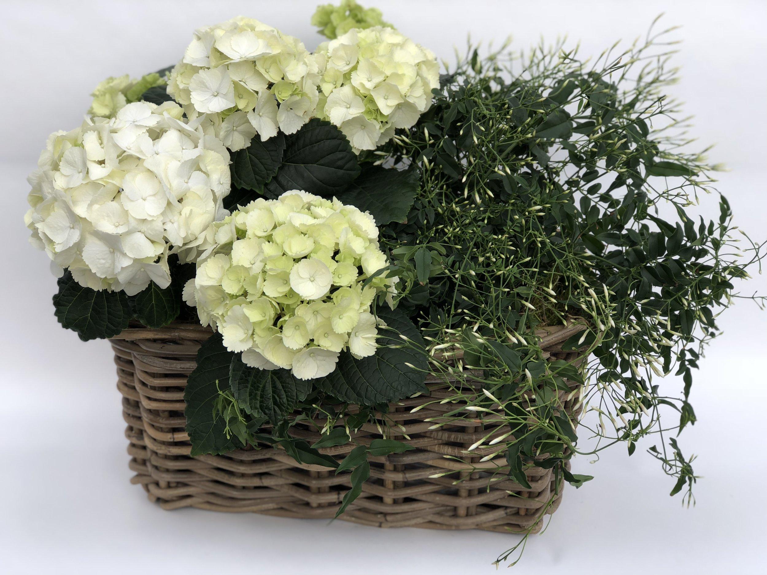Plants & Terrariums