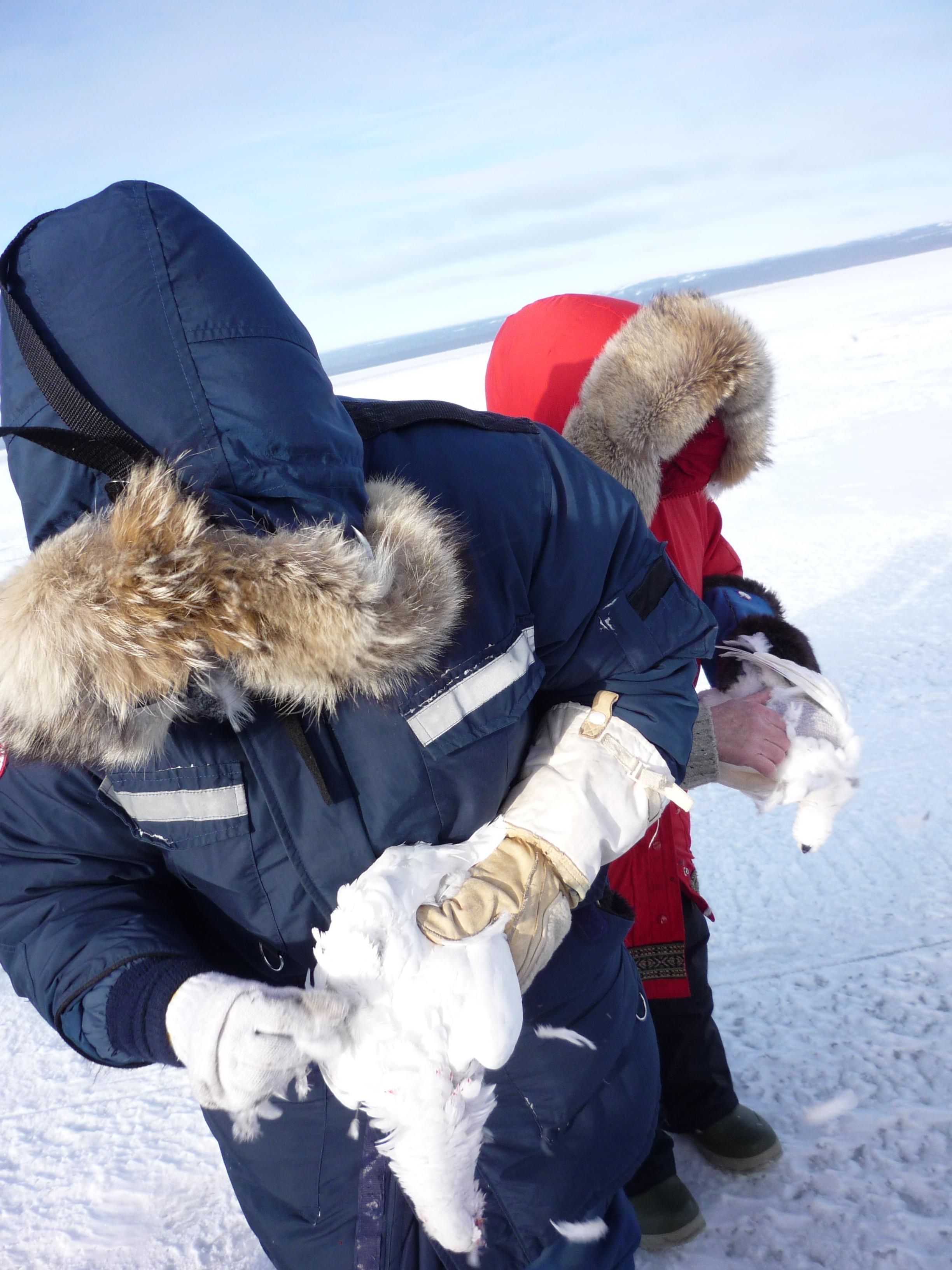 INUIT IN ARCTIC CANADA