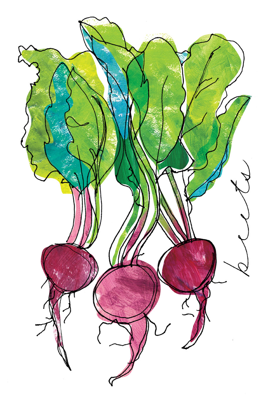 Beets spot illustration