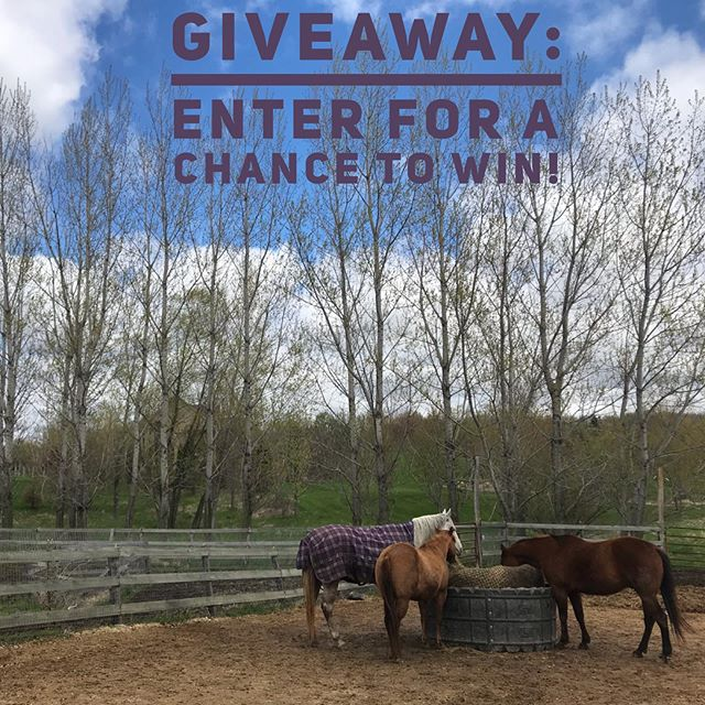 ***GIVEAWAY CONTEST*** We have made so many new connections and we are excited to make even more! Enter for a chance to win a Never Knock sweatshirt of your choice or a Never Knock hat! Simple rules to enter!  1. Follow us on Instagram!  2. Tag three of your friends below who you think would also love our products. 3. And like this post!  BAM - That's it! A winner will be chose at random on May 26th - Good Luck!  #equestrian #equestrianstyle #equeatrianart #equestrianlife #equestrianliving #equestrianlife #hunterjumper #showjumping #dressage #eventing #horses #horsesofinsta #giddyup #smallbusiness #OTTB #aqha #arabian #warmblood #ponies #mare #gelding #eventers #hoofda #barrelracing #polebending #poleweaving #socialenterprise #giveawaycontest