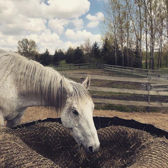 One of the best sounds in the world #equestrian #equestrianstyle #equeatrianart #equestrianlife #equestrianliving #equestrianlifestyle #hunterjumper #showjumping #dressage #eventing #horses #horsesofinsta #giddyup #smallbusiness #OTTB #aqha #arabian #warmblood #ponies #mare #gelding #eventers #hoofda #barrelracing #polebending #poleweaving #socialenterprise