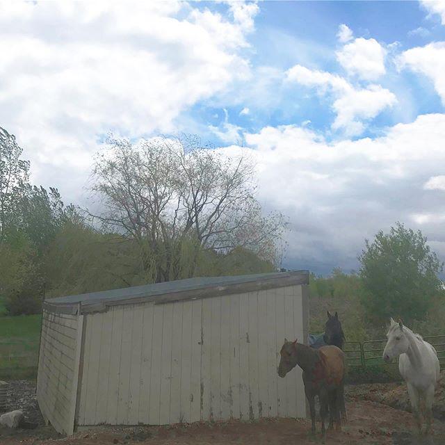 Overcast with pockets of sunshine peaking through yesterday. New website coming soon! #latergram #equestrianart #equestrianlife #equestrianliving #showjumping #dressage #eventing #horses #horsesofinsta #giddyup #smallbusiness #OTTB #aqha #arabian #warmblood #ponies #mare #gelding #eventers #hoofda #barrelracing #polebending #poleweaving #socialenterprise #barnfamily #minnesota #horsebackrider