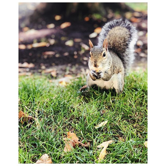 Made a new squirrelfriend today. His name is Marvin and, as it turns out, he really likes pistachios.