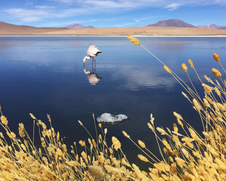 Bolivia-Kate-McAuley-Lodestars-Anthology-13.jpg