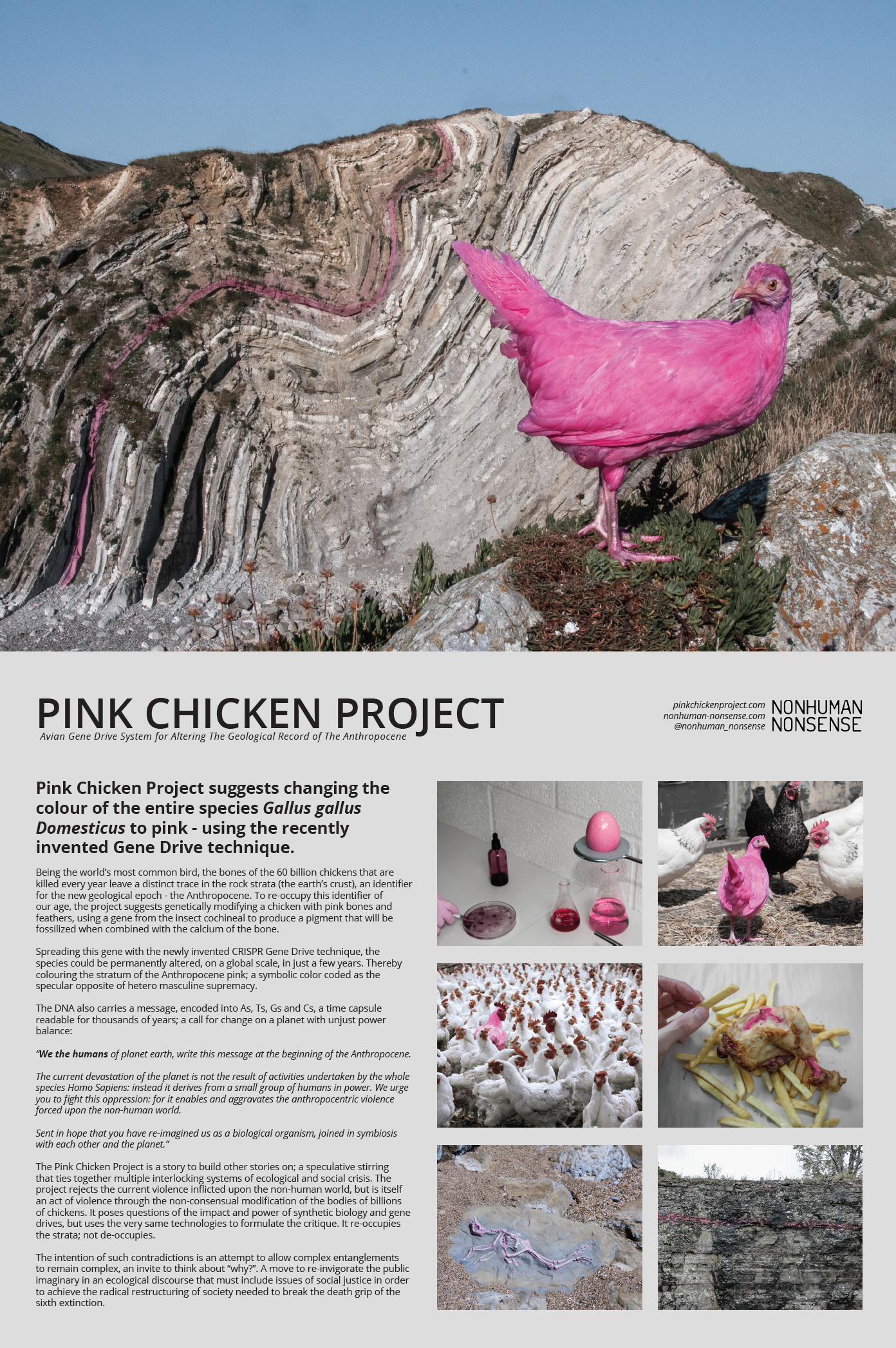 """Pink Chicken Project suggests using a """"Gene Drive"""" to change the colour of the entire species Gallus gallus Domesticus to pink. Being the world's most common bird, the bones of the 60 billion chickens that are killed every year leave a distinct trace in the rock strata (the earth's crust), a marker for the new geological age: the Anthropocene. To re-occupy this identifier of our age, the project suggests genetically modifying a chicken to create pink bones and feathers, thereby modifying the future fossil record, colouring the geological trace of humankind pink!"""