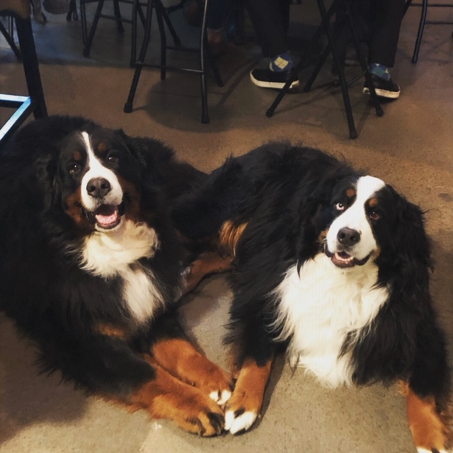 Bella & Lilly