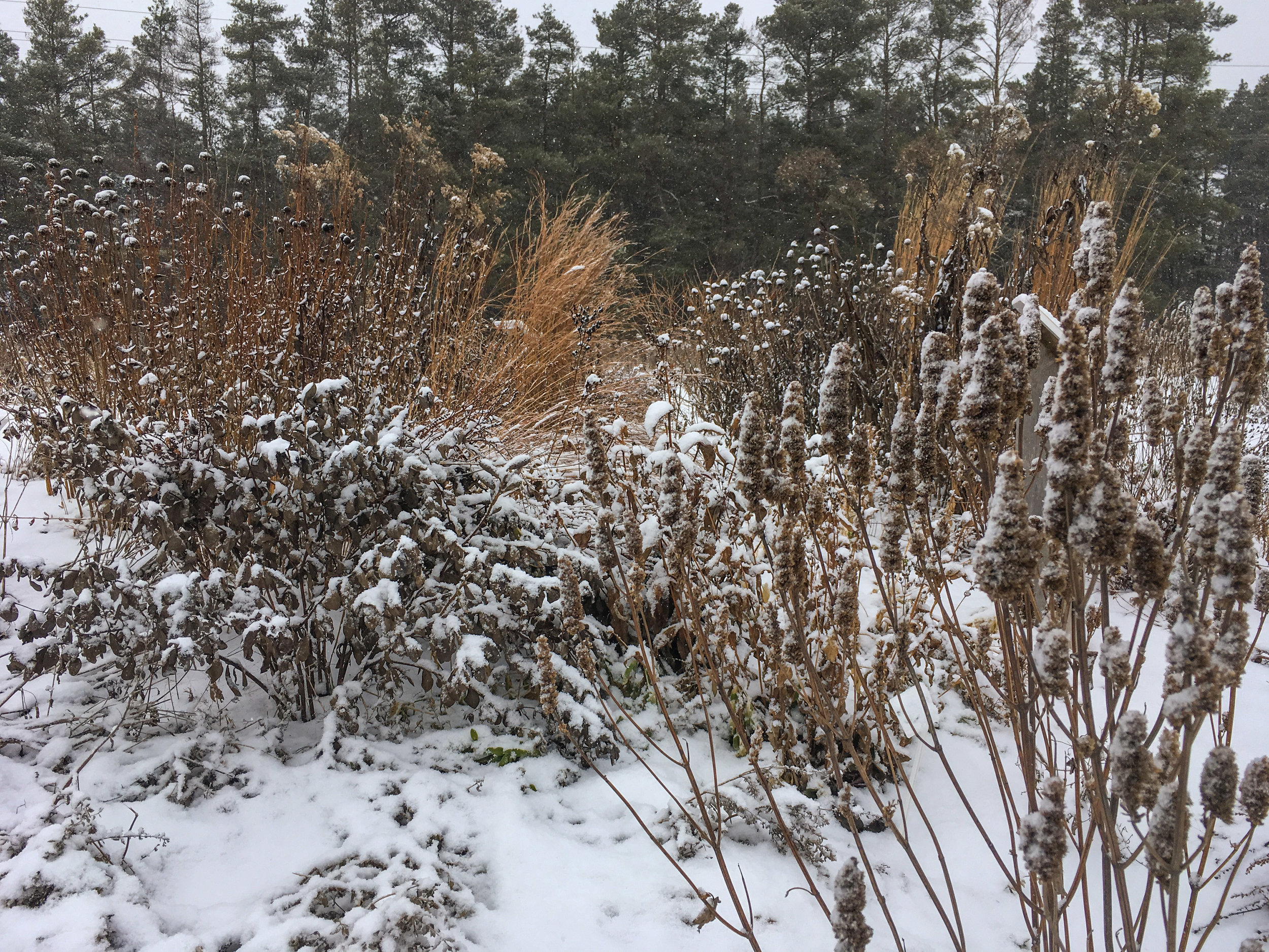 Standing plants provide important shelter for over-wintering pollinators