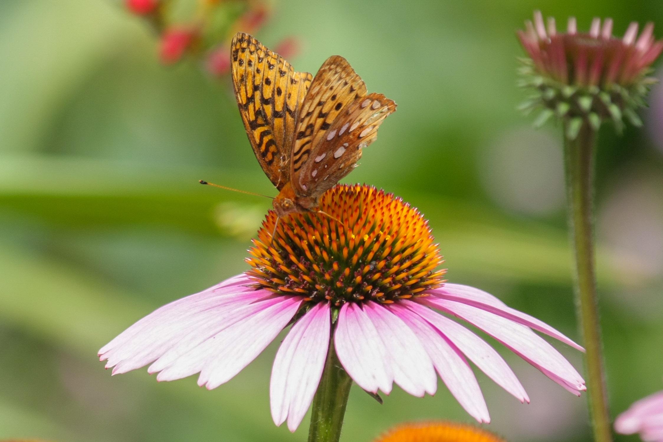 Pollinator Gardens -