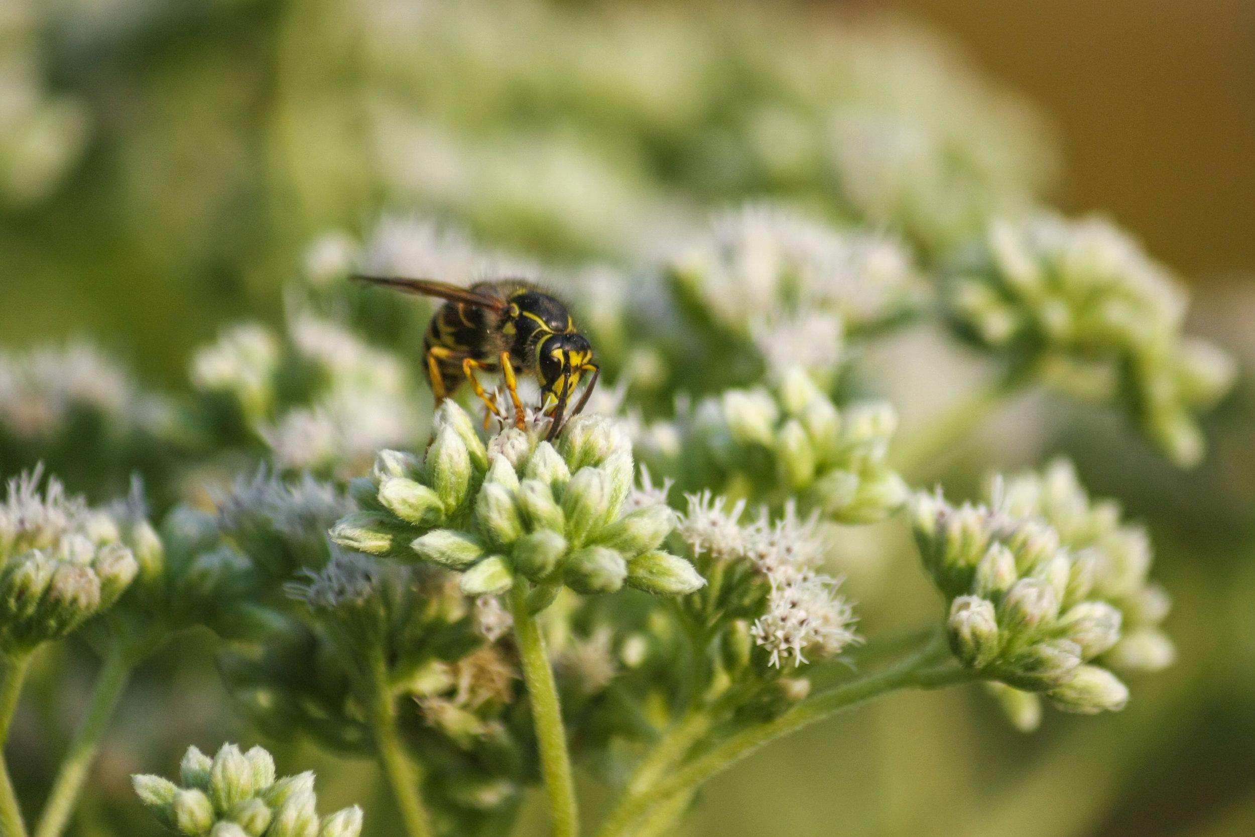 Ecological Gardening -