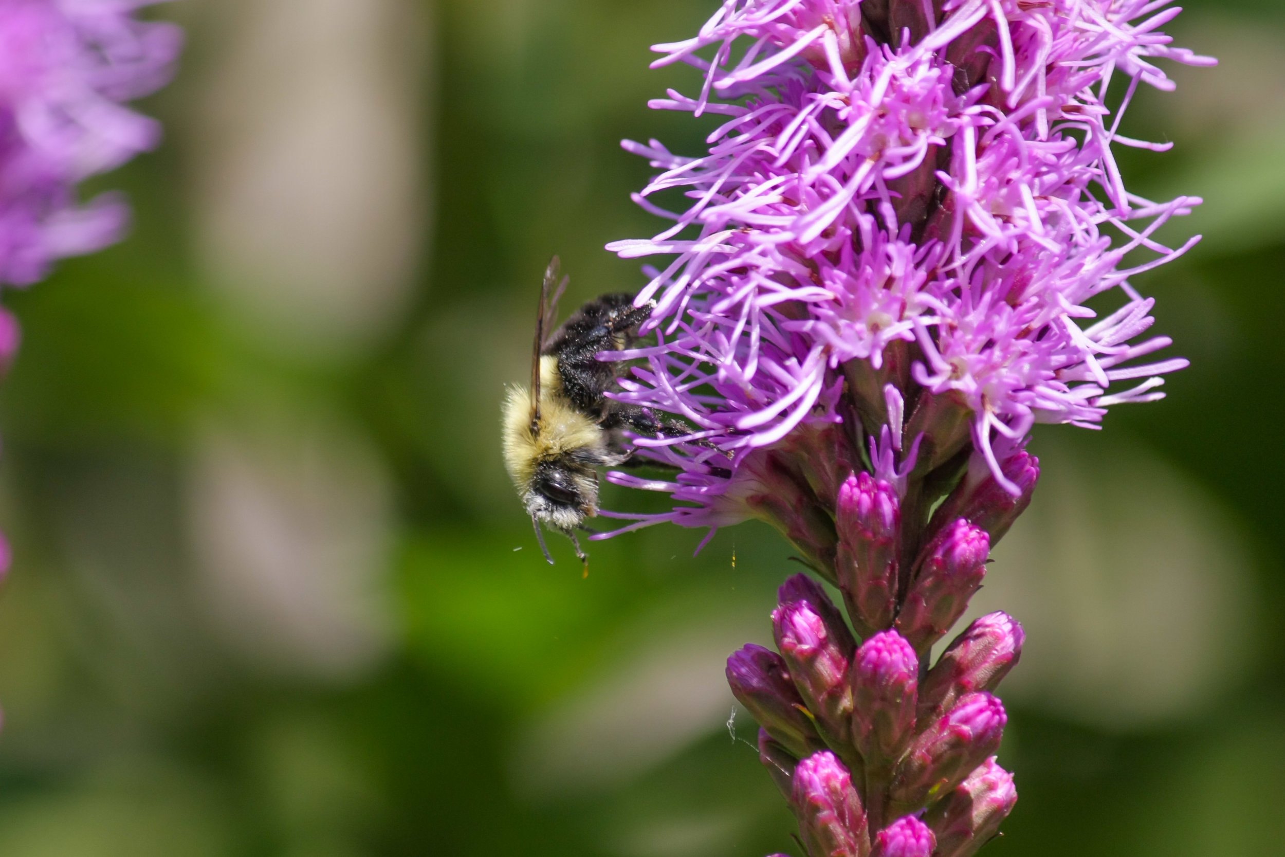 Gardening for pollinators is easy and highly rewarding