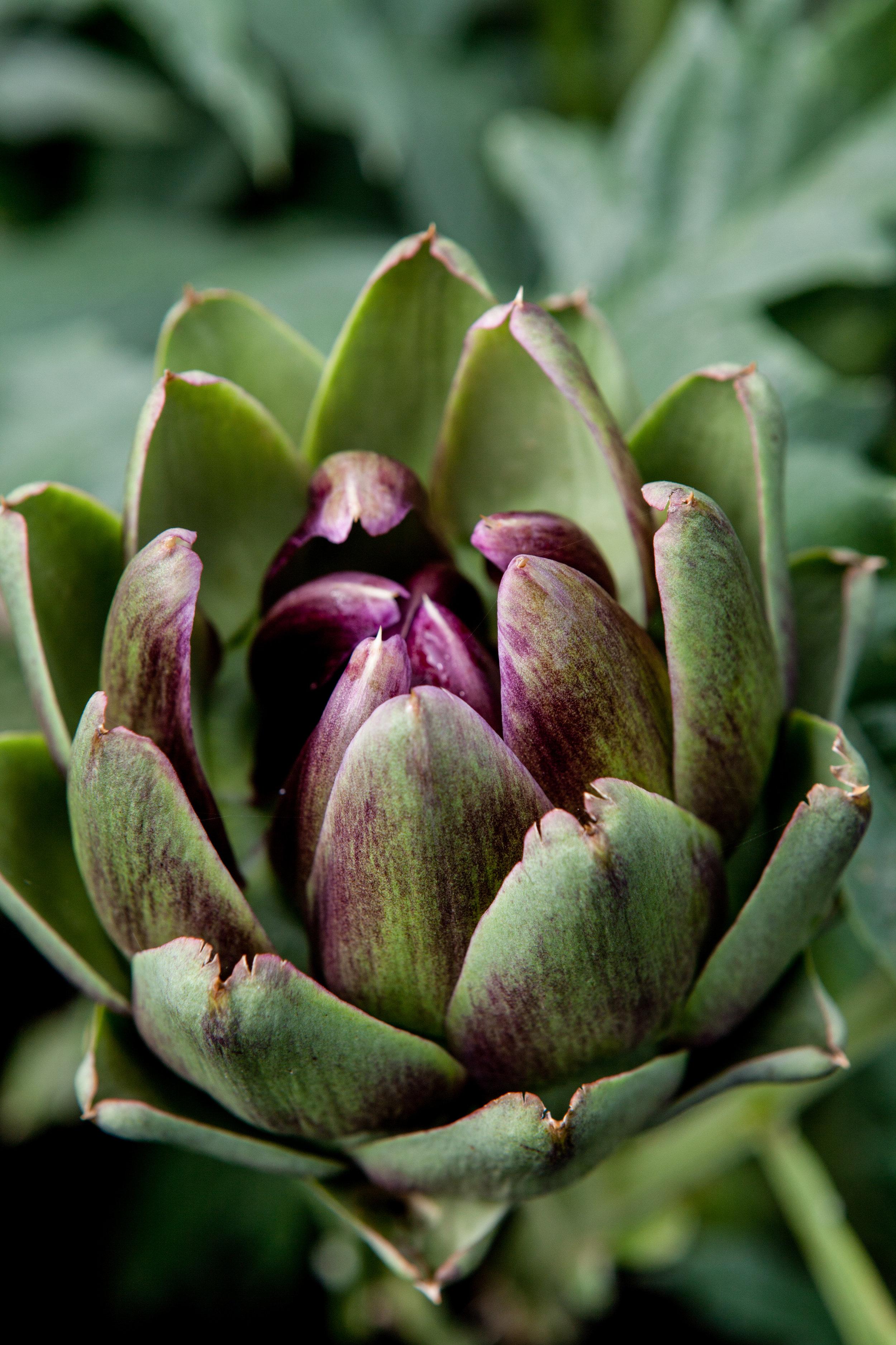 20120822-Longmeadow garden_-22.jpg