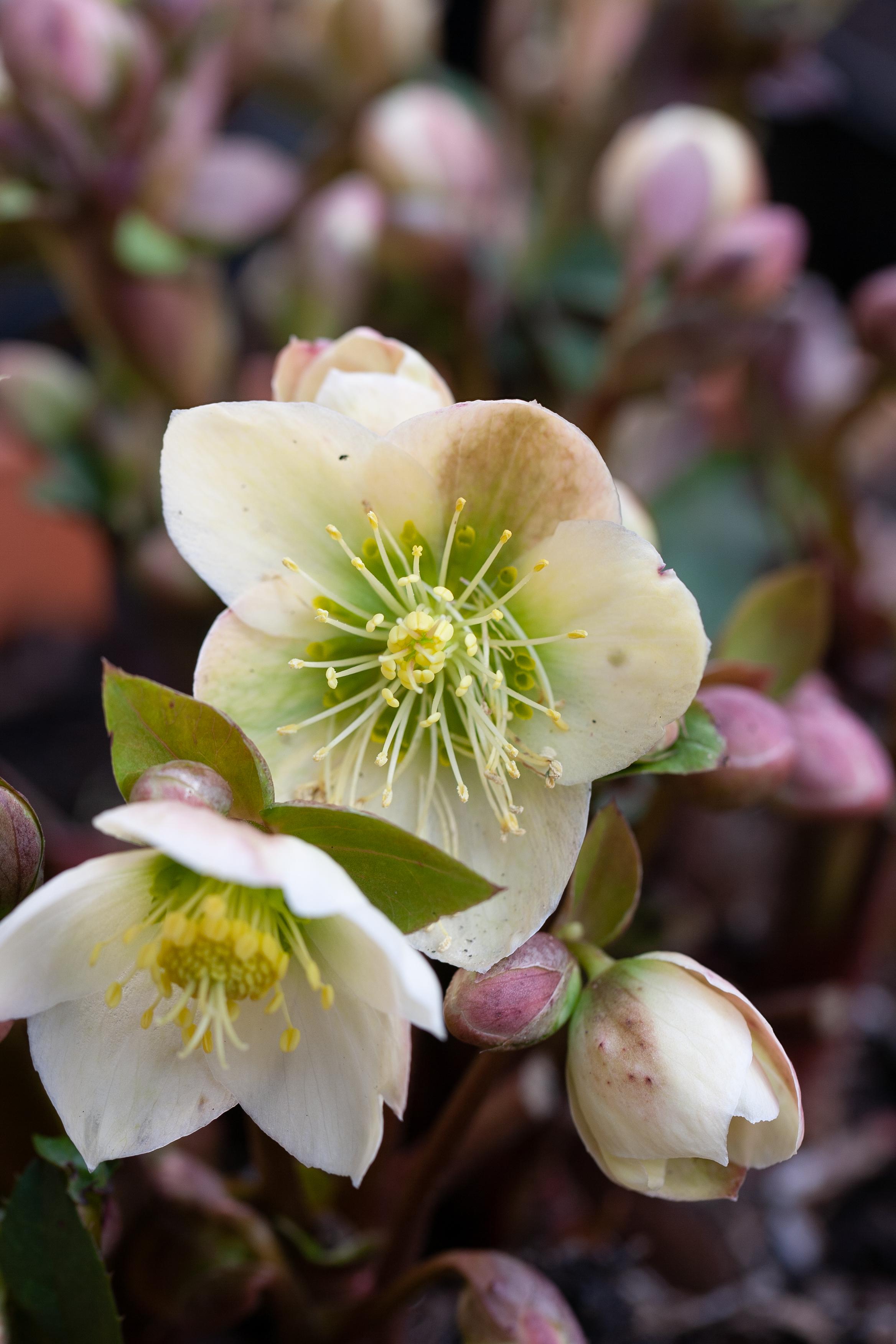 Ivington gardens 24_Feb_2011_Feb 24 2011_1510.jpg