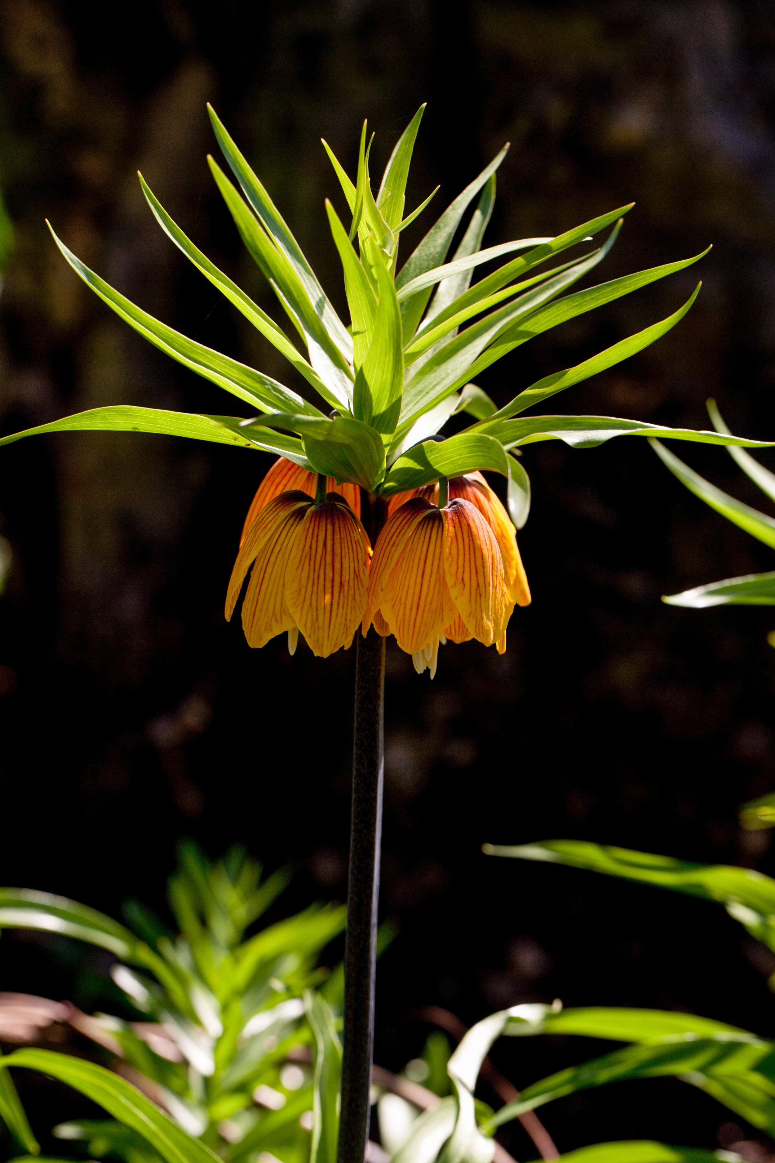 gardening_book_Apr_08_2011_3136.jpg