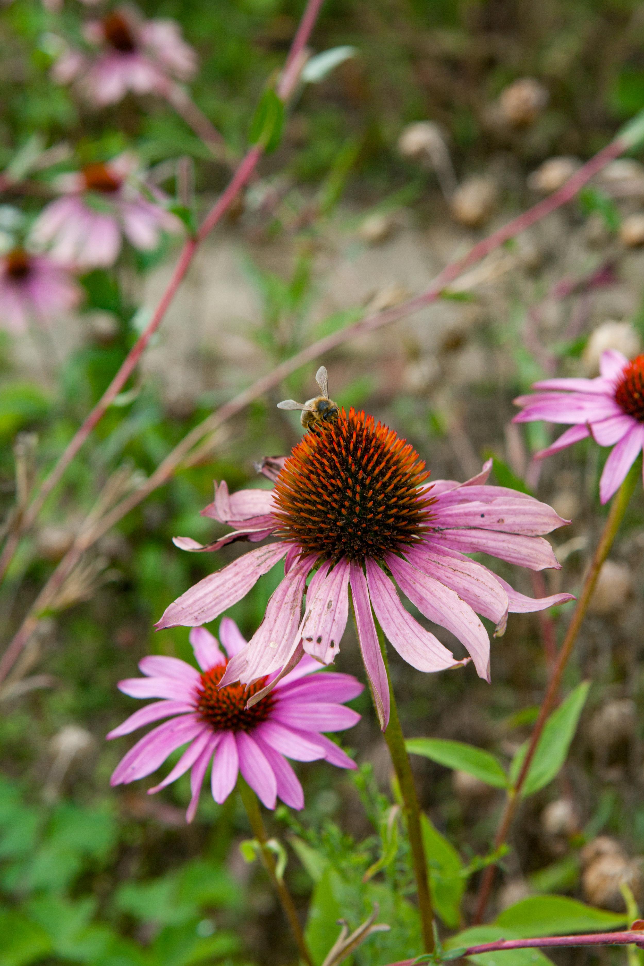 le jardin plume for website-2.jpg