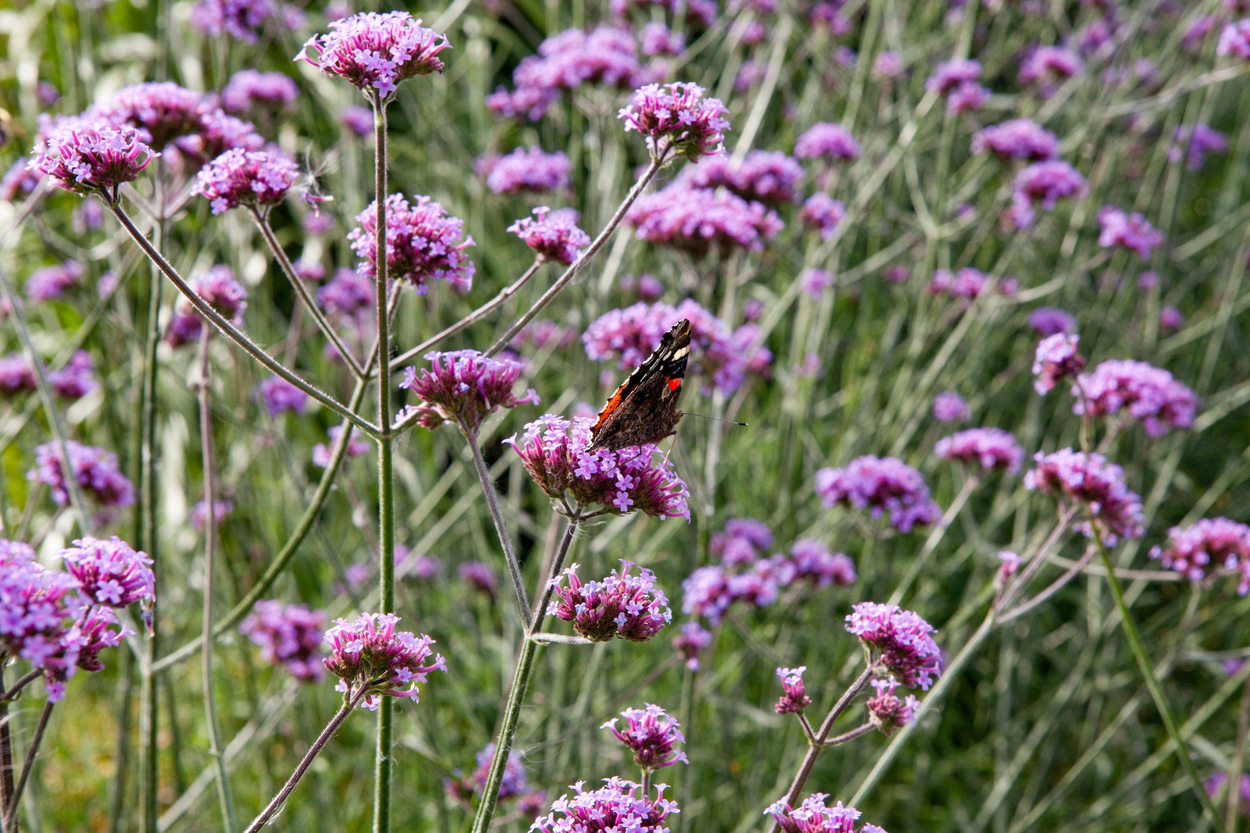 le jardin plume for website-11.jpg