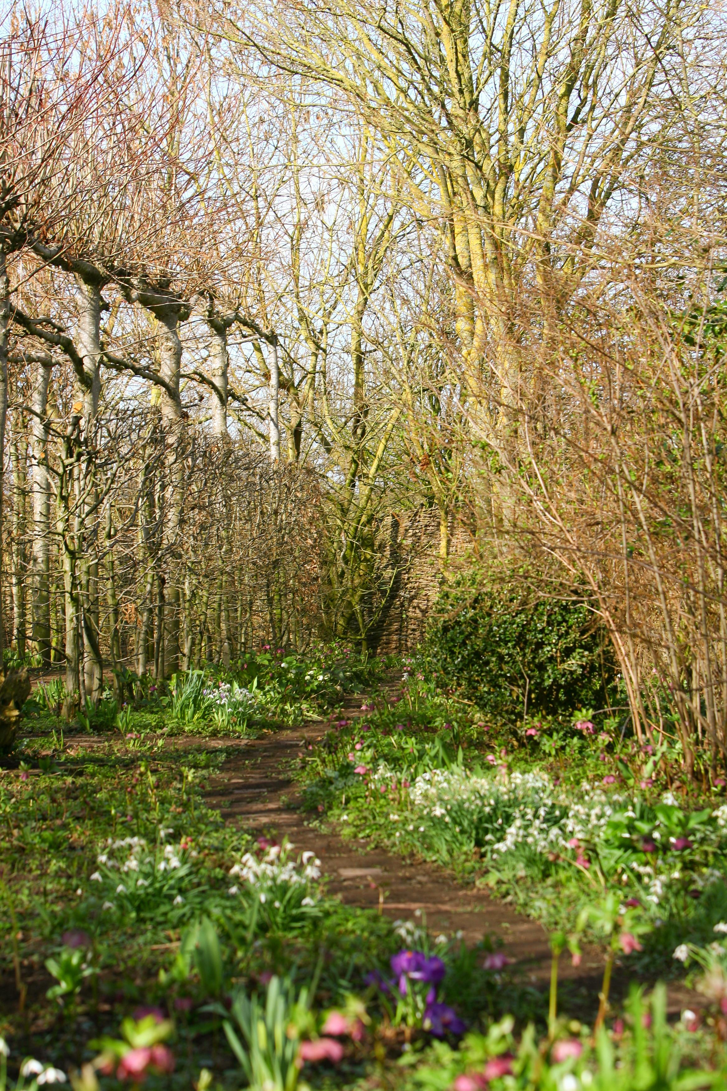 spring_garden24_Feb_2011_Feb_24_2011_1063.jpg