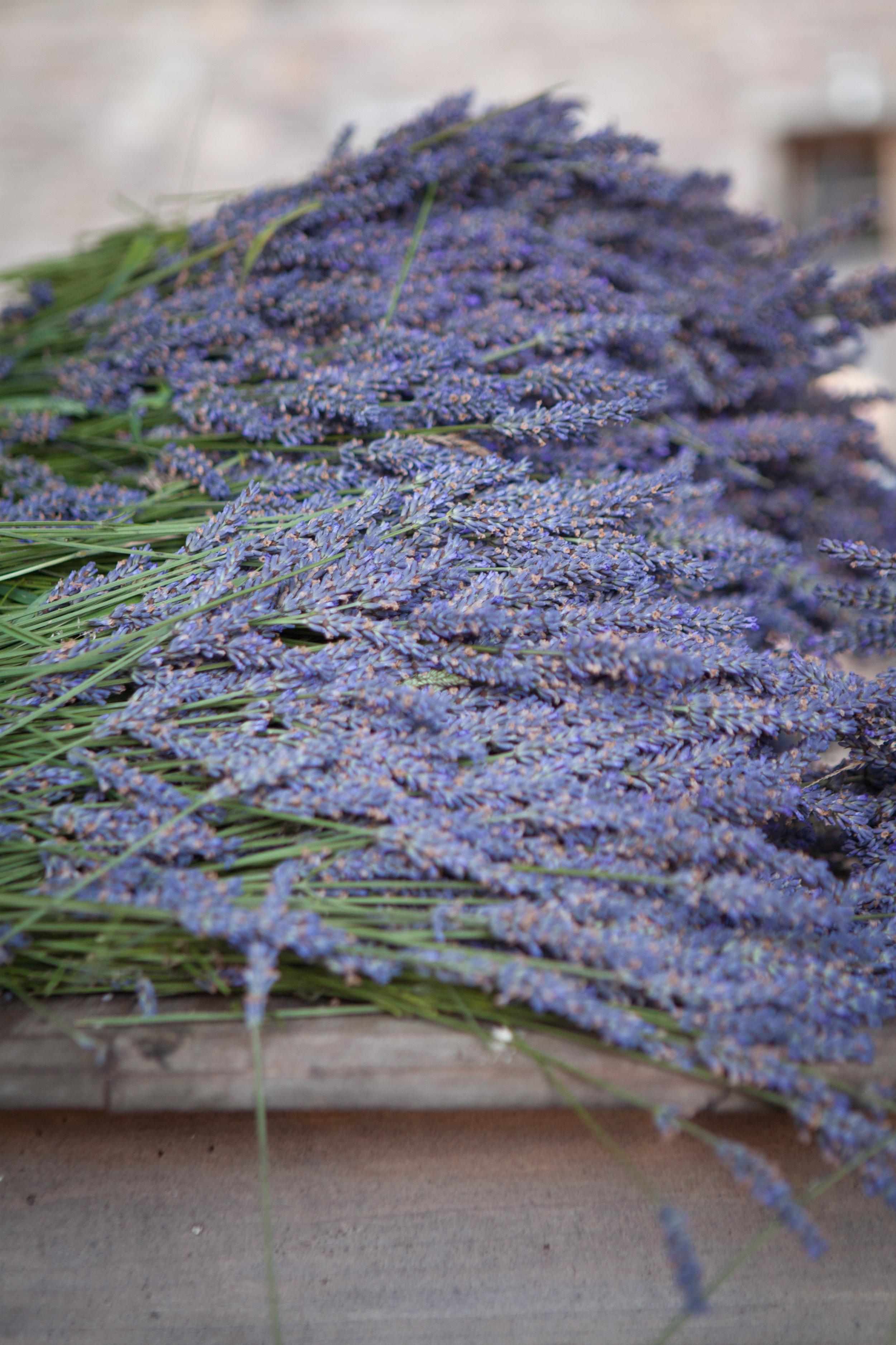 Welsh lavender-2.jpg