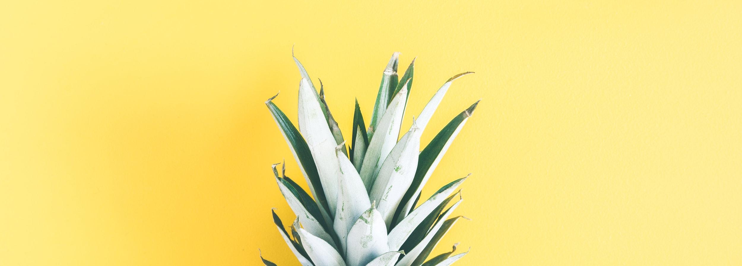 pineapplepropagationjpg