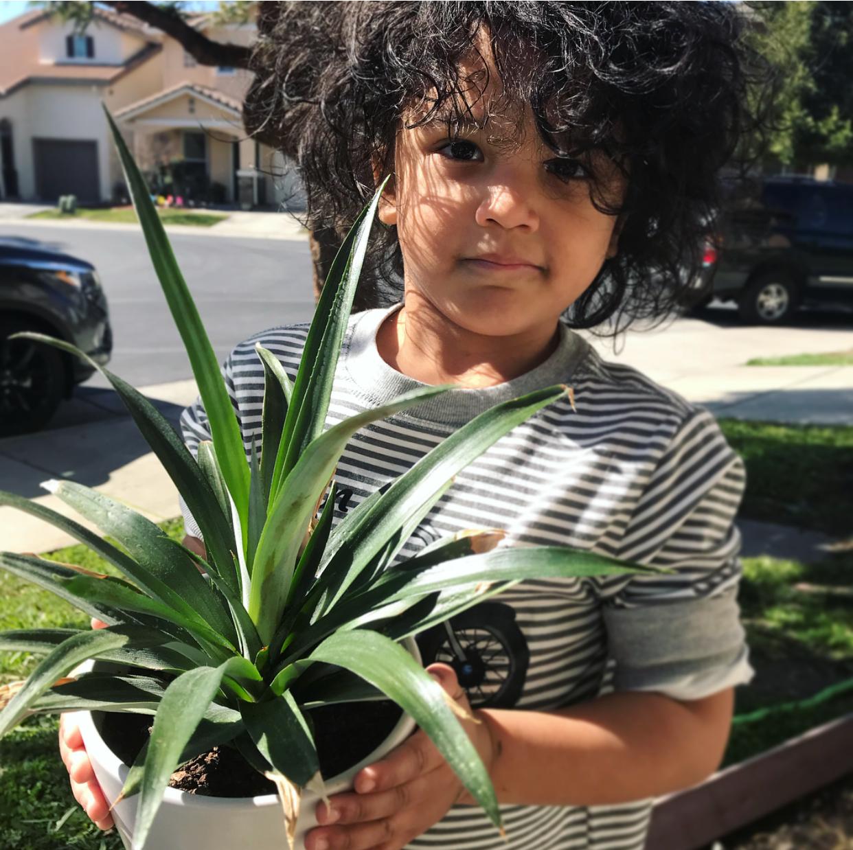 pineappledon4.jpg