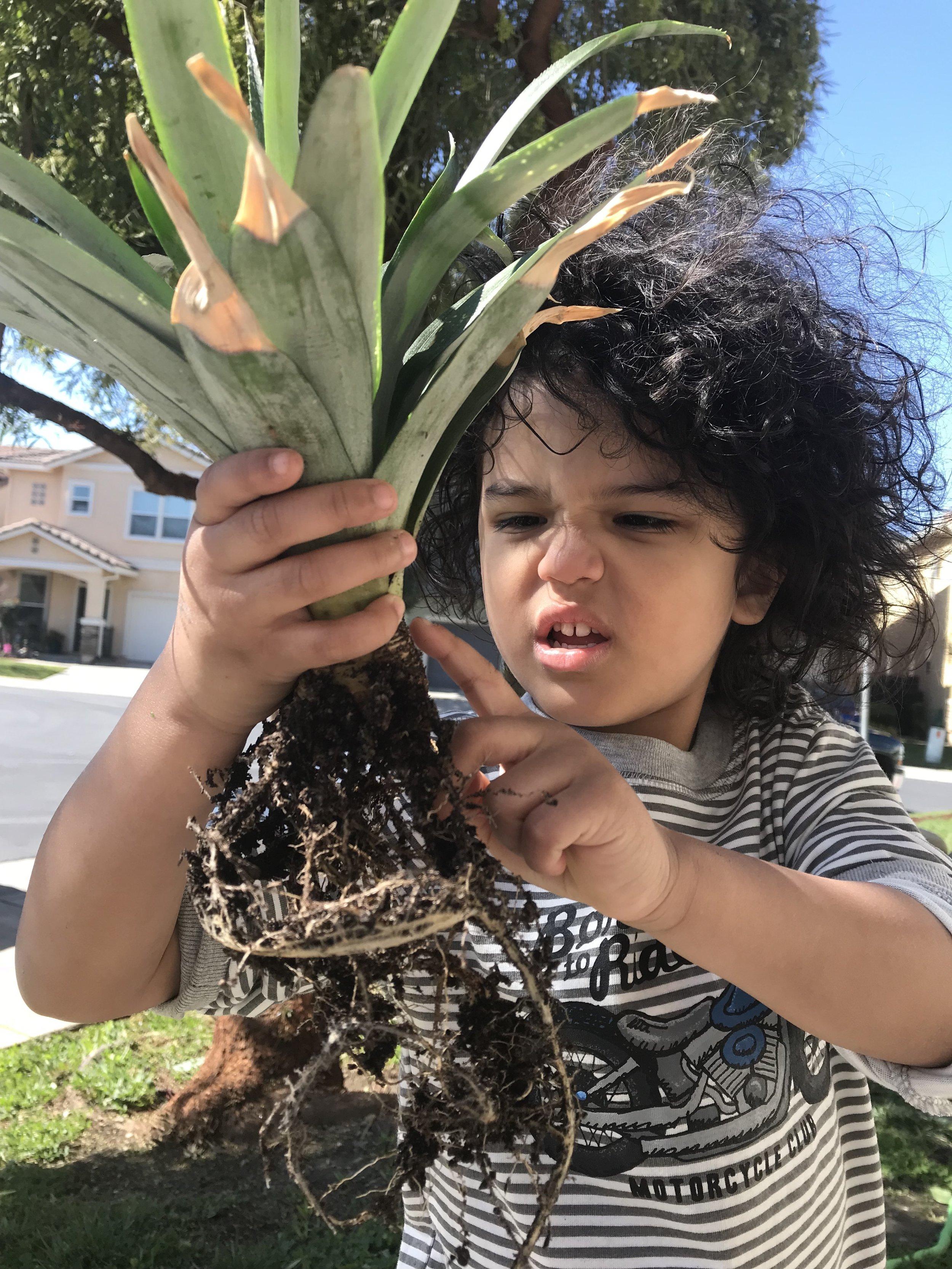 pineappledon5.JPG