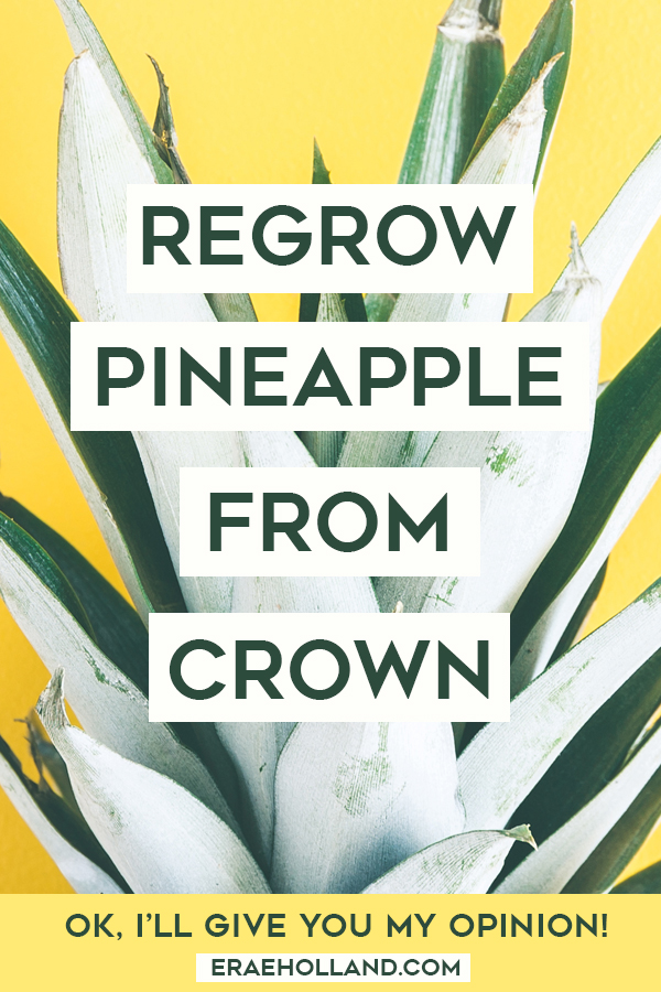 How To Regrow A Pineapple From Crown