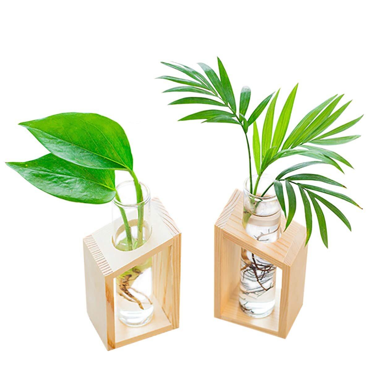 water propagation vase