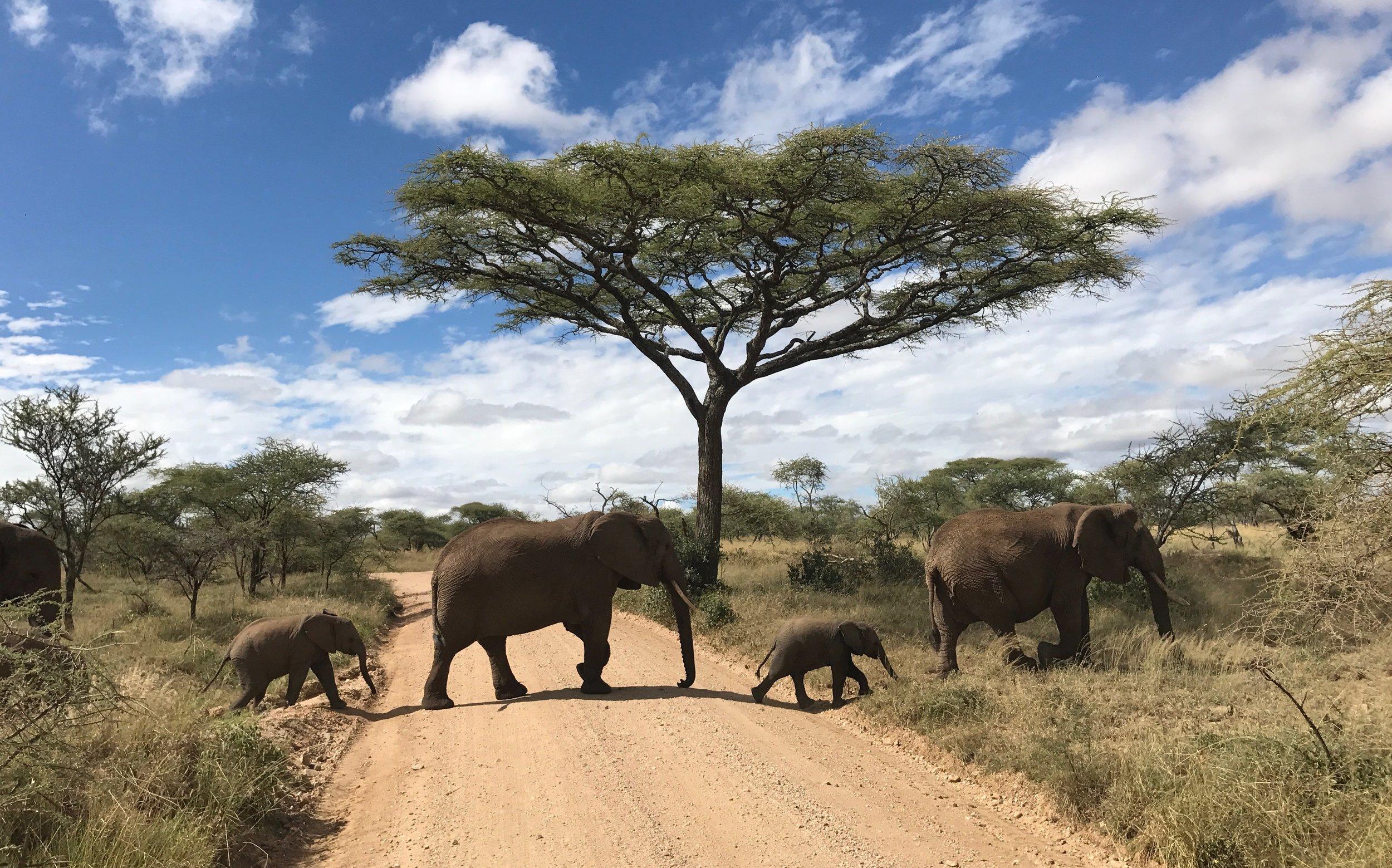 Tanzania. Image from Jessica Nabongo.