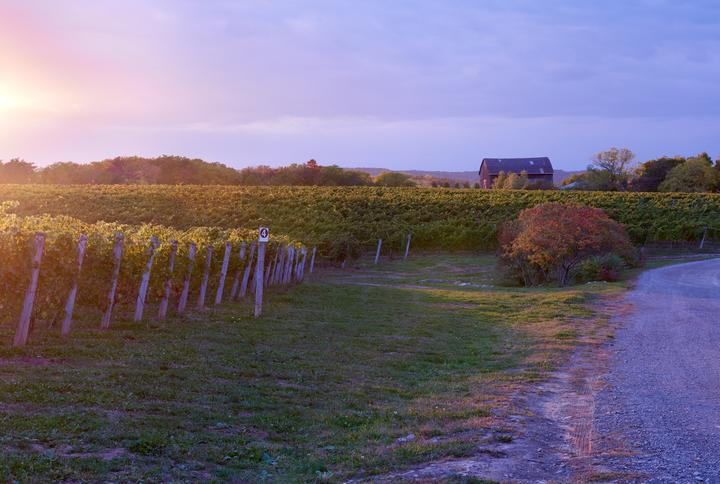 Malivoire Wine Company  Explore an exclusive 'insider' journey to Malivoire's unique Innovative and eco-centric approach to wine making. Learn about their signature gravity flow production and enjoy their best wines including their award wining Gamay!