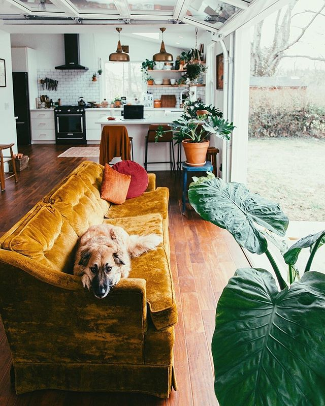 gold velvet and a giant dog? these are a few of my favorite thingsssss. Loving everything about this space from @emilyblincoe.